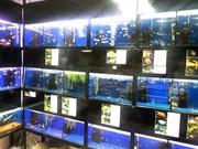 Продам право аренды с готовым бизнесом по аквариумистике